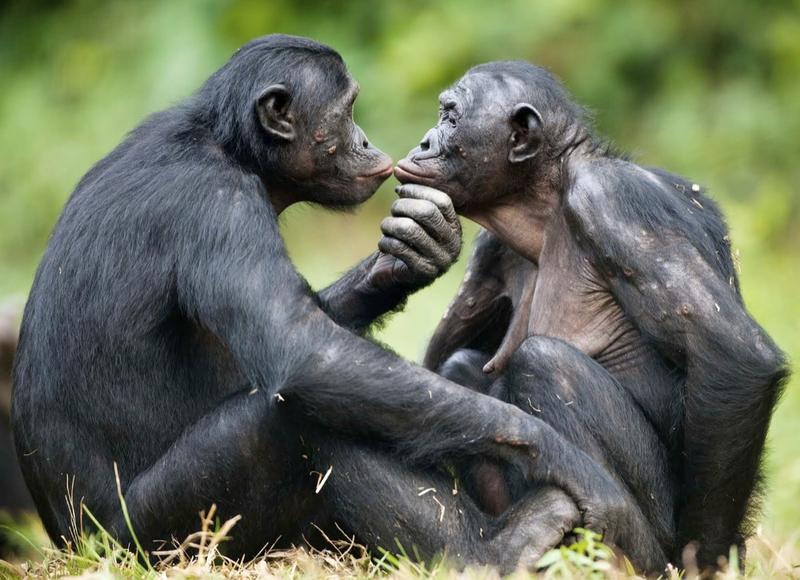 «La conscience nous différencie des animaux»